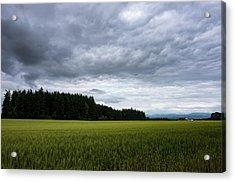 Willamette Wheat Acrylic Print