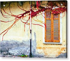 Window And Red Vine Acrylic Print