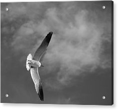Wings Acrylic Print by Don Spenner