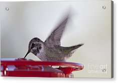 Acrylic Print featuring the photograph Wings In Motion 2 by Anne Rodkin