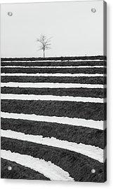 Winter Blues Acrylic Print