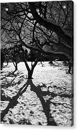 Acrylic Print featuring the photograph Winter Shadows by Yulia Kazansky
