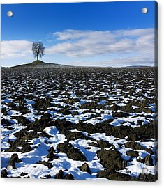 Winter Tree. Acrylic Print by Bernard Jaubert