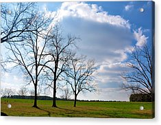 Winter Trees Acrylic Print by Jan Amiss Photography