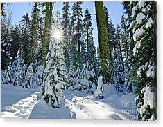 Winter Wonderland Acrylic Print by Jamie Pham