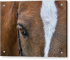 Harry The Wonder Pony Acrylic Print by JAMART Photography