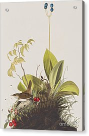 Wood Wren Acrylic Print by John James Audubon