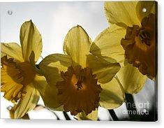 Yellow Beauty Acrylic Print by Valia Bradshaw
