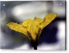 Yellow Flower Acrylic Print by Isaac Silman