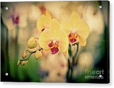 Yellow Orchids Acrylic Print by Ana V Ramirez