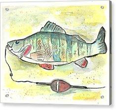 Yellow Perch Acrylic Print