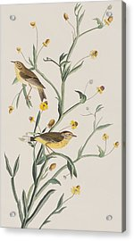 Yellow Red-poll Warbler Acrylic Print by John James Audubon