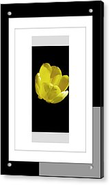 Yellow Tulip 1 Of 3 Acrylic Print by Tina M Wenger