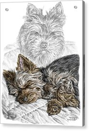 Acrylic Print featuring the drawing Yorkie - Yorkshire Terrier Dog Print by Kelli Swan