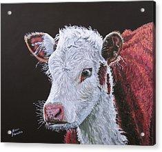 Young Bull Acrylic Print by Stan Hamilton