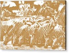 Zebra 3 Acrylic Print
