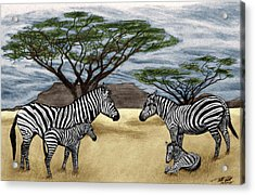 Zebra African Outback  Acrylic Print