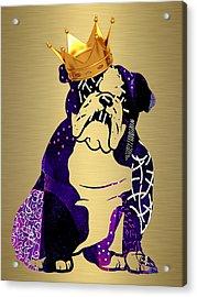 English Bulldog Collection Acrylic Print
