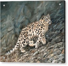 Acrylic Print featuring the painting Snow Leopard by David Stribbling