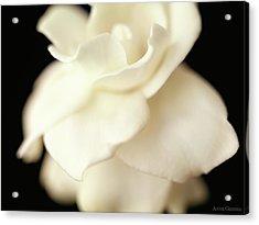 Gardenia Acrylic Print by Anne Geddes