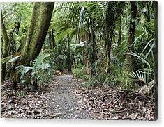 Walking Trail Acrylic Print by Les Cunliffe