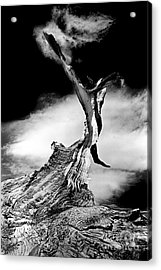 1000 Years To Create Acrylic Print by Paul W Faust -  Impressions of Light