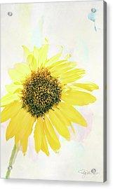 10845 Sunflower Acrylic Print by Pamela Williams