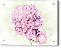 10861 Spring Peony Acrylic Print