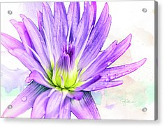 10889 Purple Lily Acrylic Print by Pamela Williams