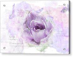 10947 Tulip Acrylic Print