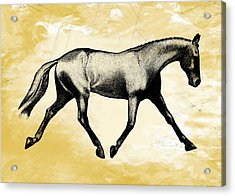 Lengthen Trot Stencil Acrylic Print by JAMART Photography