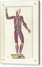 The Science Of Human Anatomy Acrylic Print by National Library of Medicine
