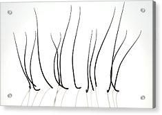Microscopic Hair Fibers Acrylic Print