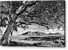 Wilpena Pound  Acrylic Print