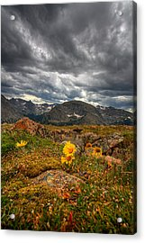 12000 Foot Flower Acrylic Print by Peter Tellone