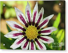 Nice Flower Acrylic Print