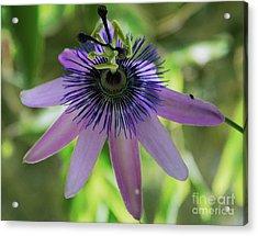 Purple Passiflora Acrylic Print by Elvira Ladocki