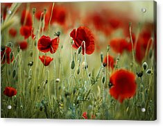 Summer Poppy Meadow Acrylic Print by Nailia Schwarz