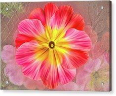 Pink Primrose #2 Acrylic Print