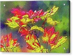 Vine Maple Color Acrylic Print