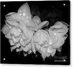 Acrylic Print featuring the photograph Flowers by Elvira Ladocki