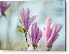 Magnolia Flowers Acrylic Print by Nailia Schwarz