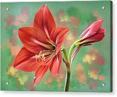 Amaryllis #1 Acrylic Print