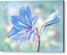Amaryllis #2 Acrylic Print