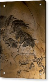 150501p086 Acrylic Print by Arterra Picture Library
