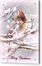 1554-003 Cardinal Acrylic Print