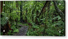 Acrylic Print featuring the photograph Forest Boardwalk by Les Cunliffe
