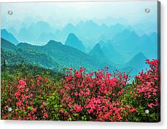 Blossoming Azalea And Mountain Scenery Acrylic Print