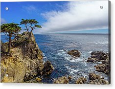 17 Mile Drive Pebble Beach Acrylic Print