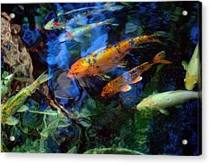 The Koi Pond Acrylic Print by Marc Bittan